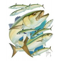 Aftco T-Shirt Bluefish