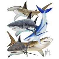 Aftco T-Shirt Shark Collage